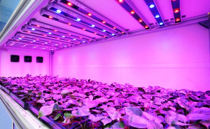 LED-grow-light3.jpg